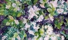 Eugenia Antipova. Bird-cherry Tree. Oil on canvas, 61,5х87. 1968